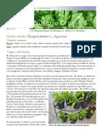 culantro.pdf
