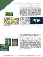 Deskripsi Hutan Kota Lidah Wetan