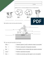 as plantas  2º.pdf