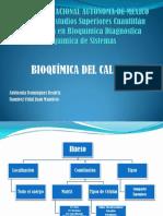 Bioquímica Del Calcio