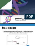Tema4 - Estructura Función Ácidos Nucleicos