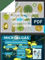 Afloramiento de Microalgas Importancia