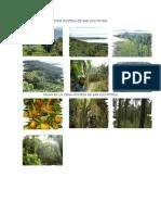 Imágenes de Flora Zona Husteca de San Luis Potosi