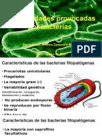 Enfermedades Provocadas Por Bacterias