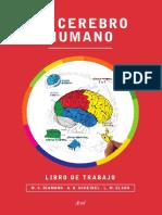 el_cerebro_humano cuaderno de trabajo muestra.pdf