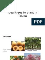 Trees for Toluca