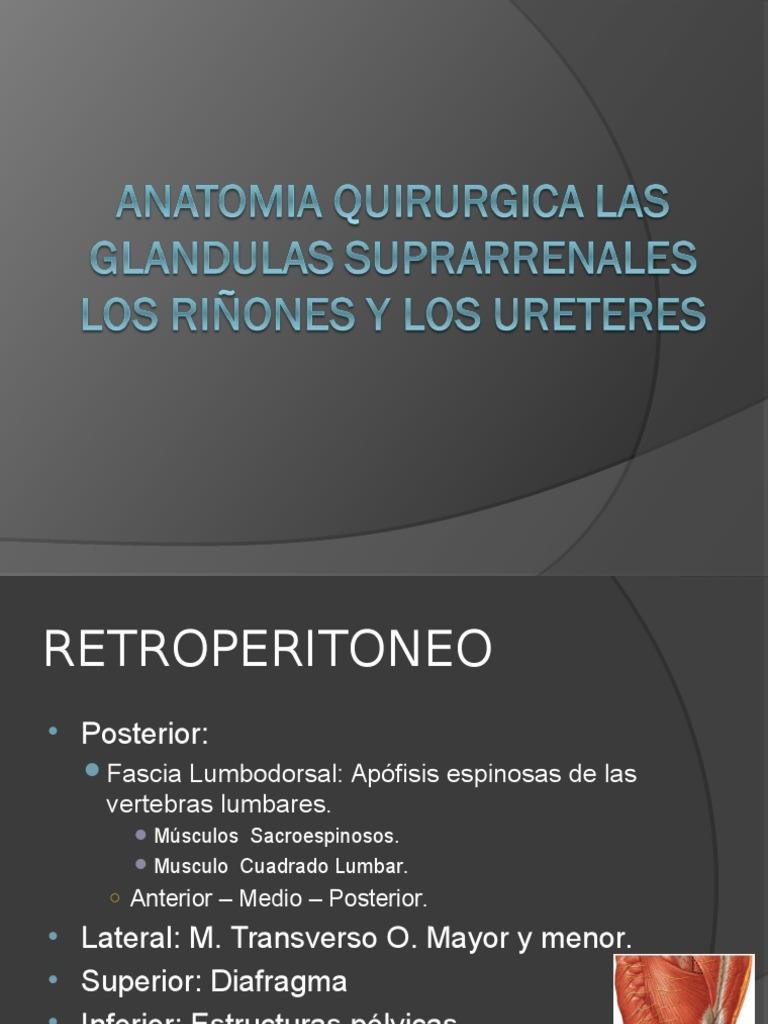 Anatomia renal.ppt