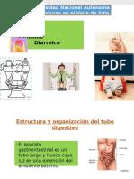 Diarrea Semiologia