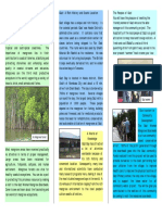 Gazi Women Mangrove Boardwalk Brochure Low
