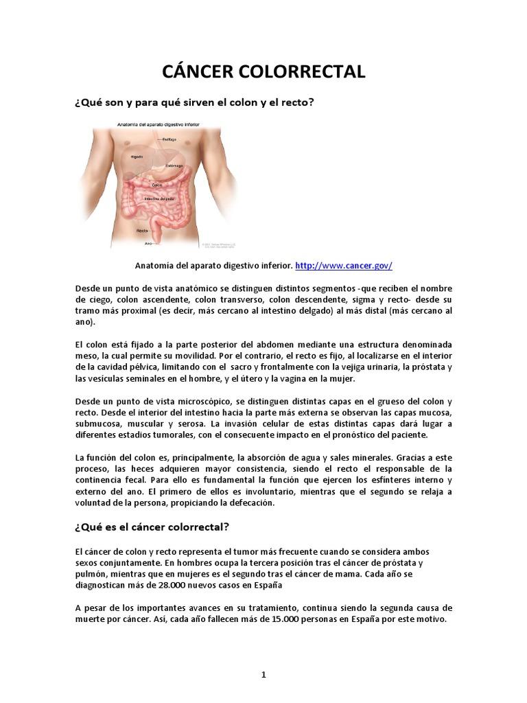 Encantador Tramo Recto Del Abdomen Friso - Anatomía de Las ...