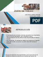 trasporte en ovinos.pptx