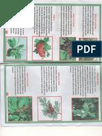 Plantas Medicinales Para enfermedades