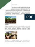 Actividad Económica en Guatemala
