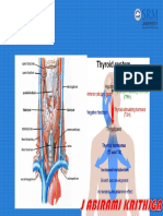 1thyroid Anatomy & Physiology