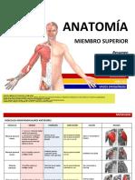 ANATOMÍA - Resumen Músculos - Miembro Superior.desbloqueado