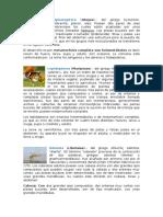 Insectos Vertebrados e Invertebrados