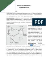 Práctica 3 Molecular