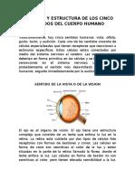 Anatomia y Estructura de Los Cinco Sentidos Del Cuerpo Humano