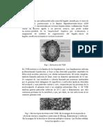 HEPATITIS B Virologia y Epidemiologia