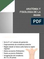 anatomiayfisiologiadelamama-101220203217-phpapp02