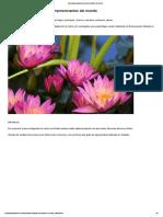 Las Plantas Acuáticas Más Populares y Bellas _ Plantas