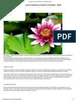 Conoce las acuáticas _ Plantas.pdf