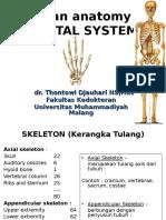 osteologi
