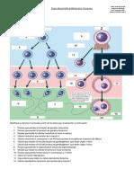 Guía desarrollo embrionarioL1.pdf