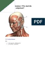 Muskulatur Kopfbereich