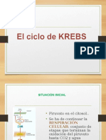 Ciclo de Kcresb