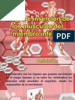 ORIGEN E INSERCIÓN DE LOS MUSCULOS DE MIEMBRO SUPERIOR