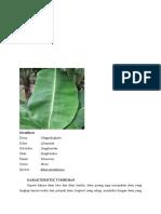 Deskripsi daun pisang