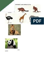 Animal Pic