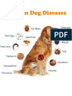 A Brief Guide to Common Dog Diseases and Health Problems