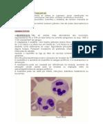 Leucócitos e Plaquetas