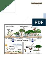 13 Ecología I-Copiar