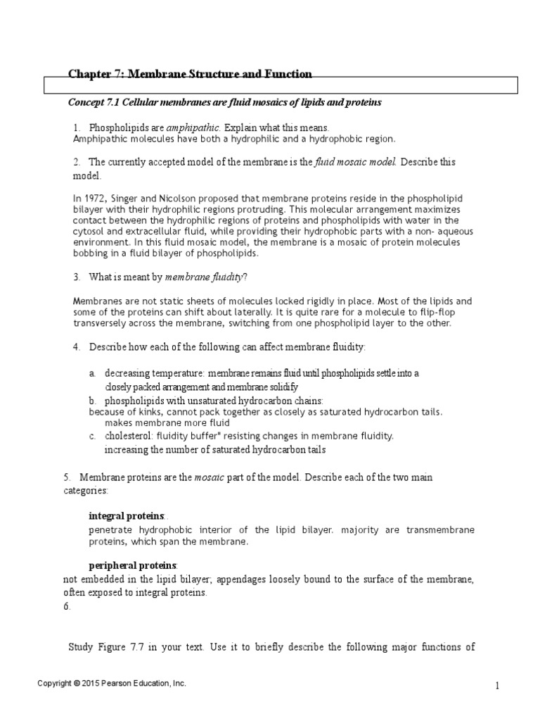 Chapter 7 Study Guide(1) | Cell Membrane | Membrane Potential