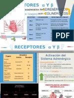 Receptores α y β