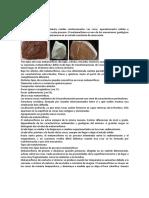 Rocas Metamorficas y Sedimentarias.pdf