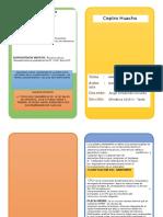 Diptico Modelos Varios Para Office Word