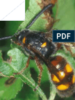 Taxonomic study of the family Scoliidae (Hymenoptera; Aculeata) in Iraq