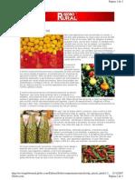 Como Plantar Pimenta Globo Rural