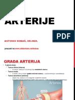 arterije-140116155824-phpapp02