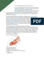 Descripción y Funciones Del Aparto Dogestivo