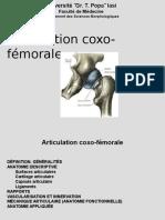 5. Articulation Coxofemurale