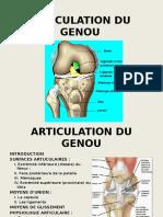 6. Articulation Du Genou