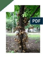 Arvores-e-Folhas.doc