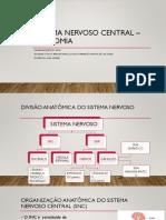 Aula 2 - SNC Anatomia