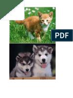 Recortes Sobre Animales, Etc