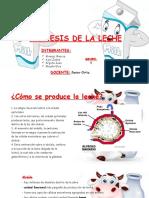 Sintesis de La Leche-1